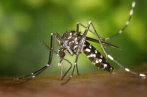 New Dengue vaccine